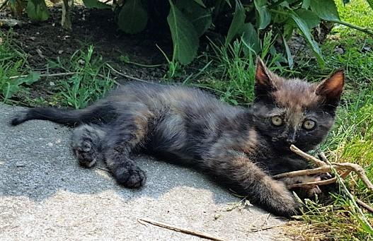Tecko née le 7 mai 2018 20180711