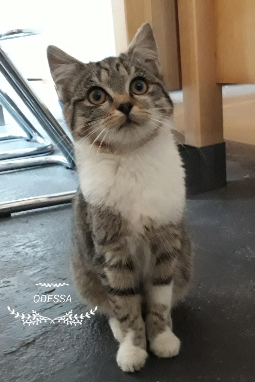 Cracotte ex ODESSA née en août 2018 20181112