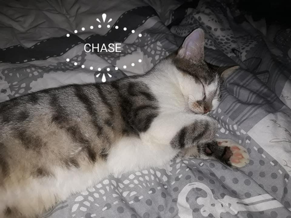 Chase né en août 2018 51109410