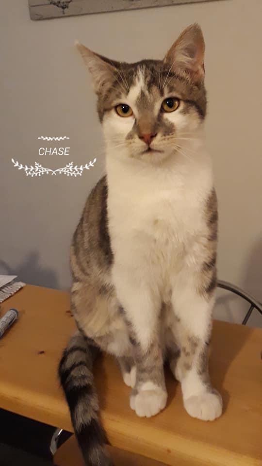 Chase né en août 2018 51573010