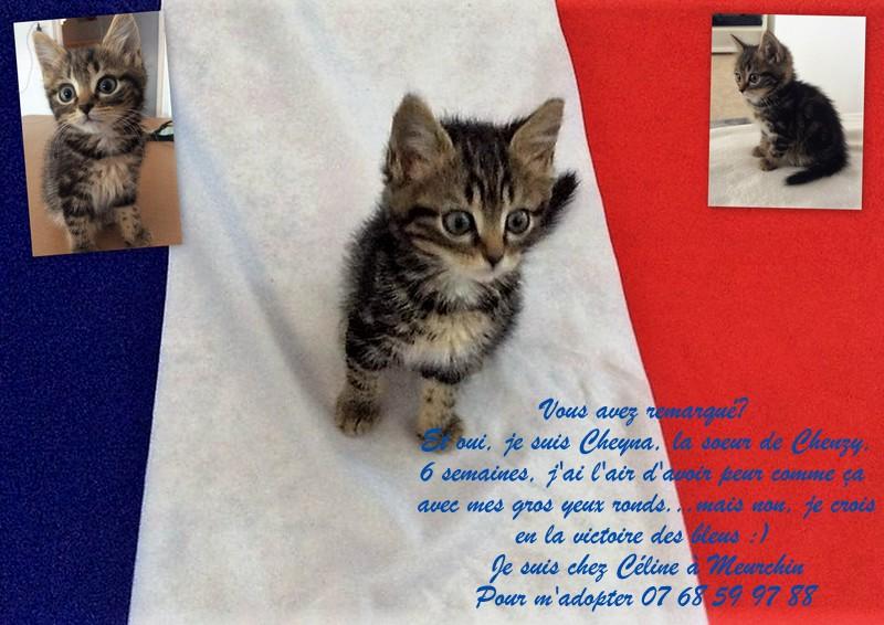 Cheyna petite chatone Cheyna10