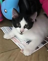Maguette,née en avril 2018 Img_5110