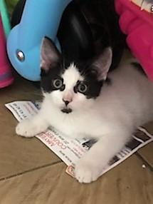 Maguette,née en avril 2018 Img_5111