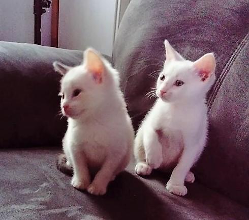 Opale née le 1er juin 2018 Saphir11