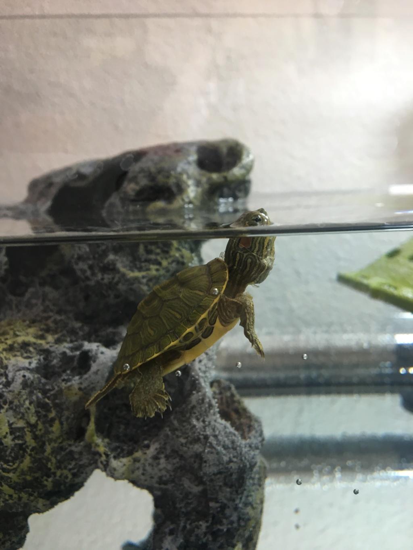 Installation tortue de Floride ?  Img_7710