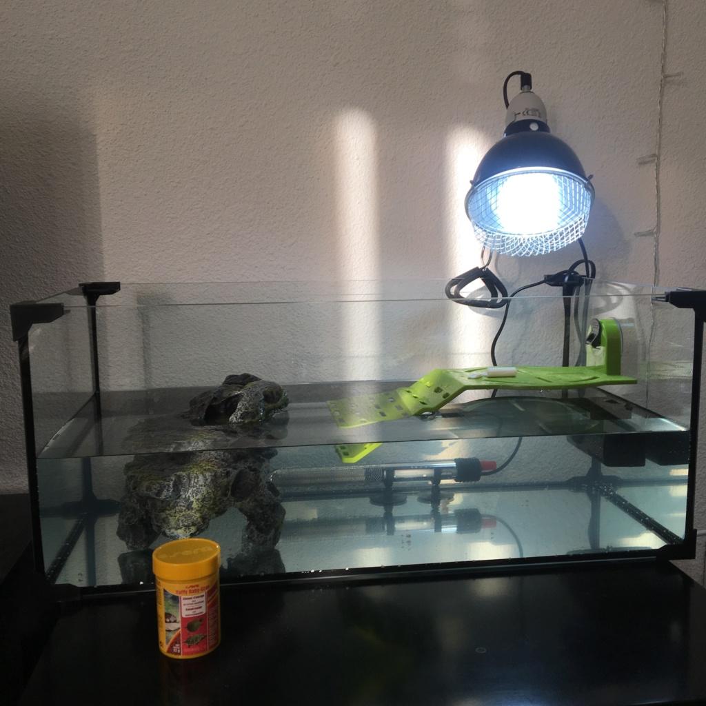 Installation tortue de Floride ?  Img_7714