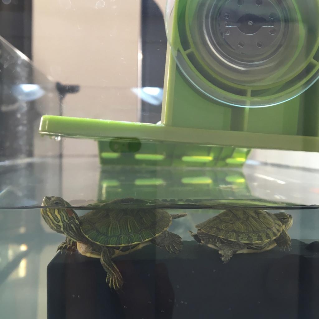 Installation tortue de Floride ?  Img_7715