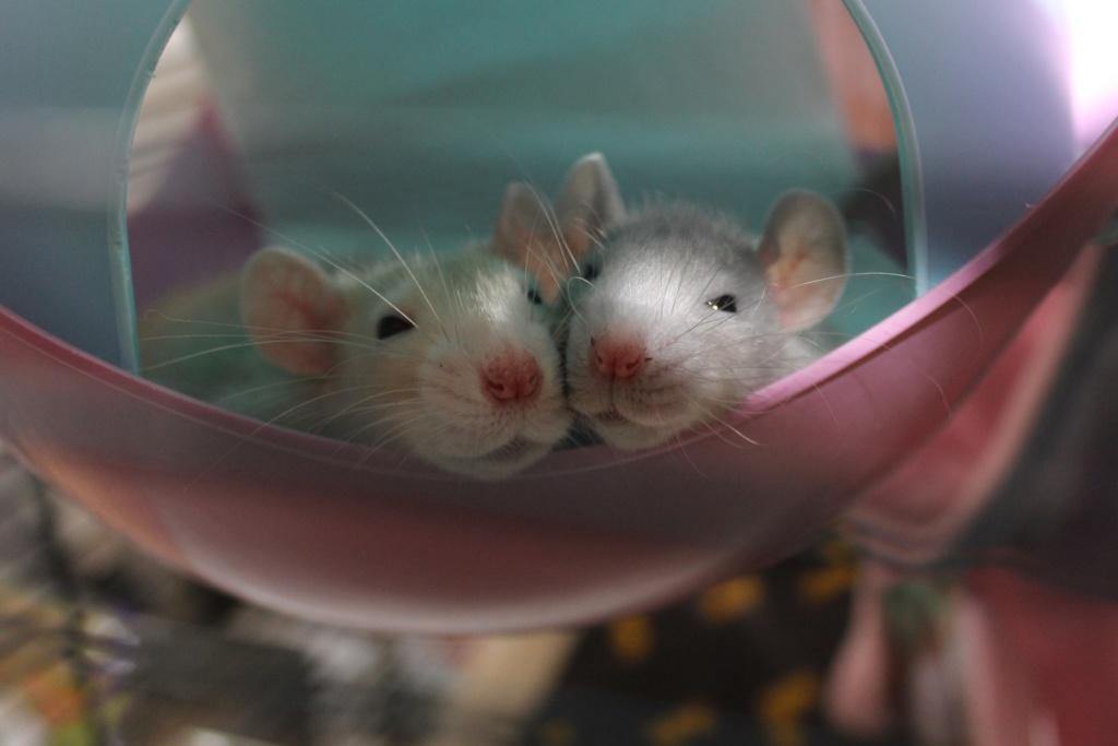 Les ratons dans le vent (la Mollusquerie) - Page 38 04_1610