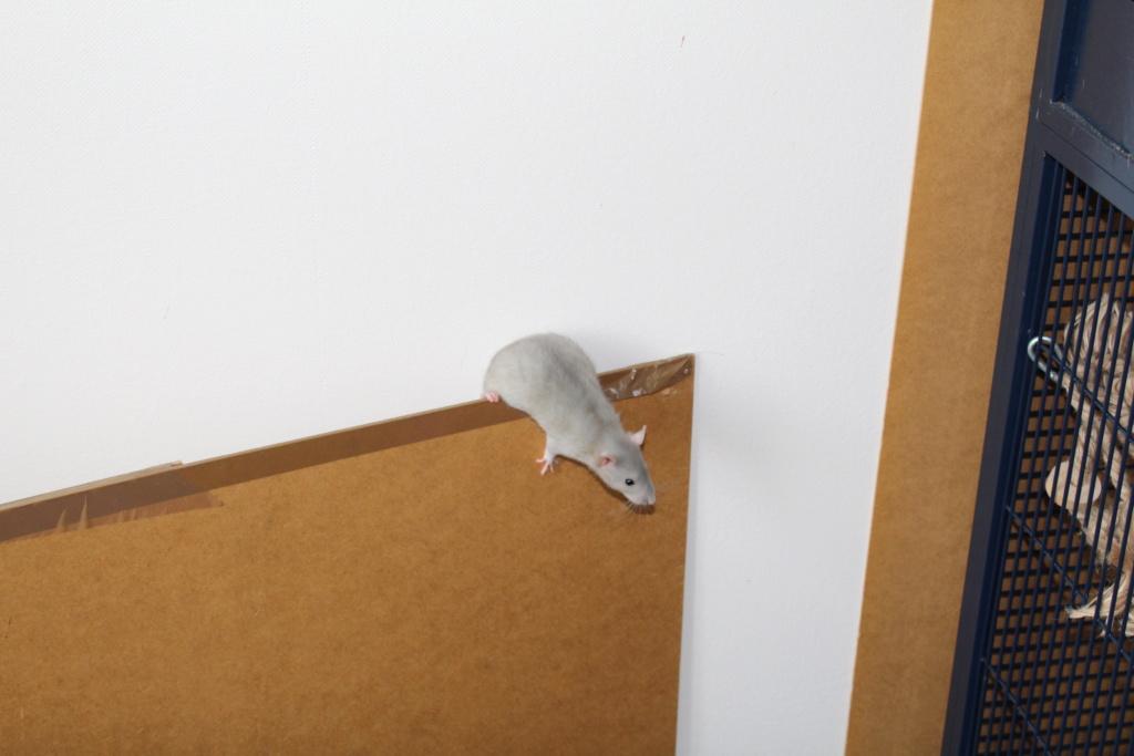 Les ratons dans le vent (la Mollusquerie) - Page 38 05_3_c10