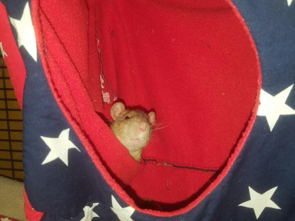 Les ratons dans le vent (la Mollusquerie) - Page 29 20170110