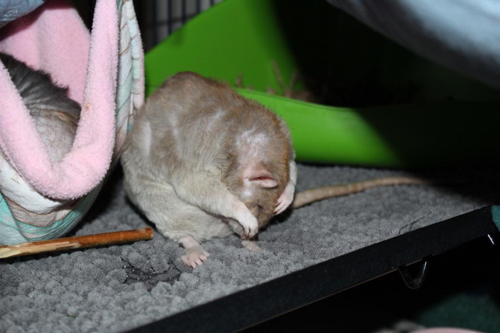 Les ratons dans le vent (la Mollusquerie) - Page 29 Img_0910