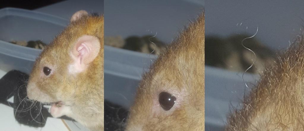 Les ratons dans le vent (la Mollusquerie) - Page 30 Remus10