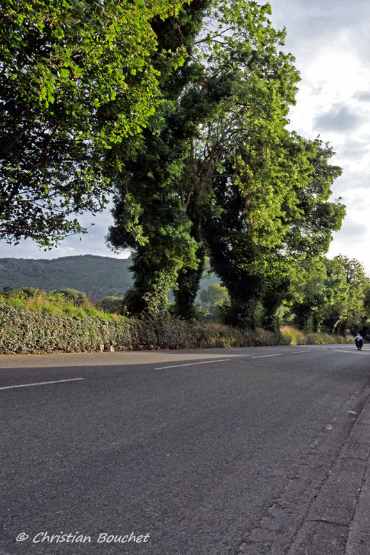 [Road racing] Classic TT/ Manx GP 2019  - Page 23 20191341