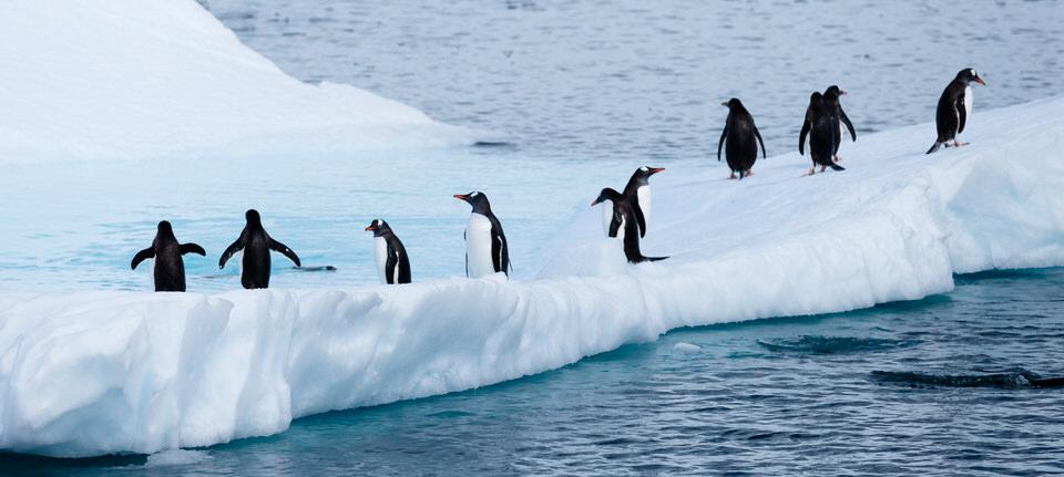 Antarctique - Page 4 1510