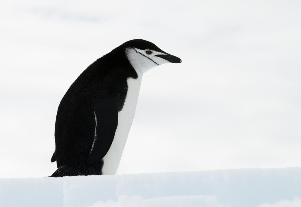 Antarctique - Page 4 18a10