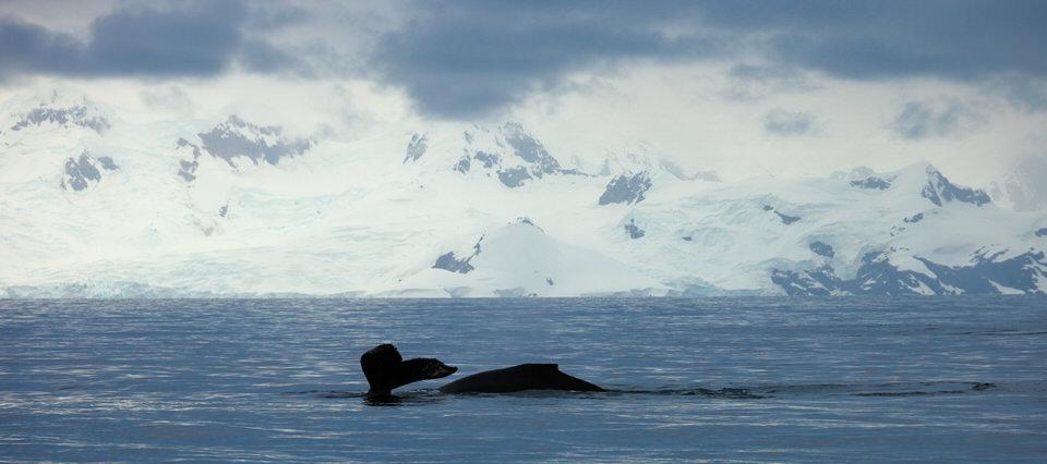 Antarctique - Page 4 210