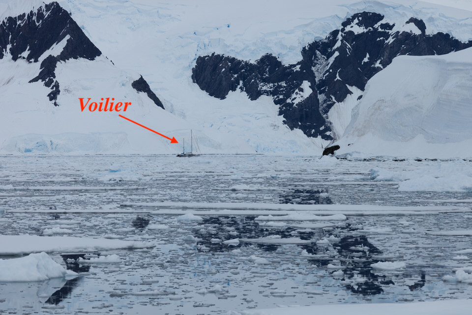 Antarctique - Page 4 910