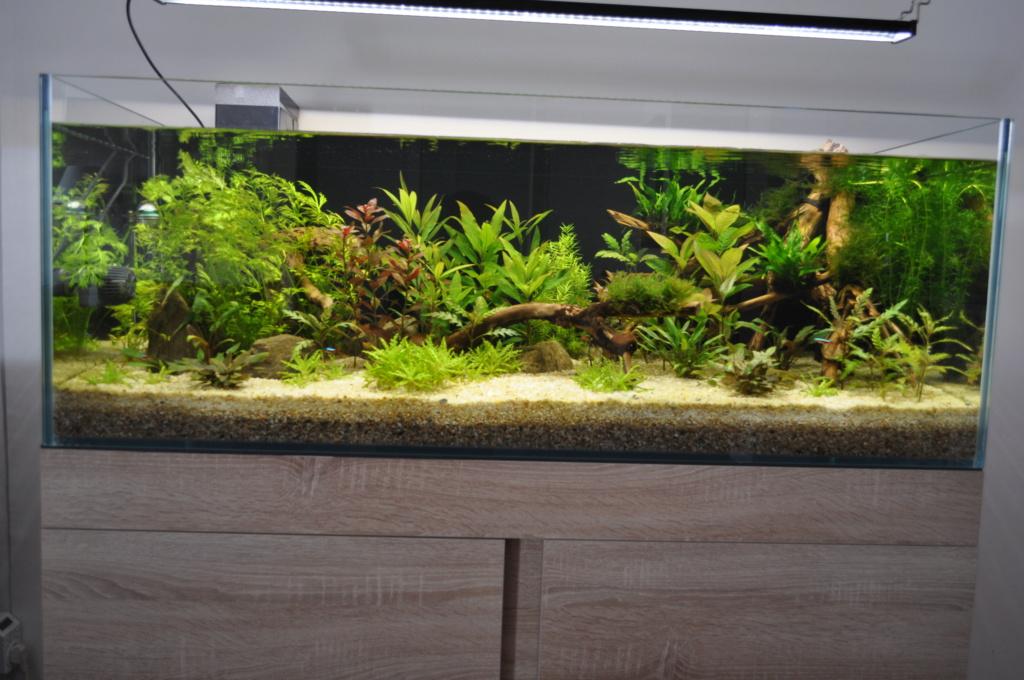 Aquarium Amazonien 720L avec mur végétale +cascade + Lagune  Dsc_4210