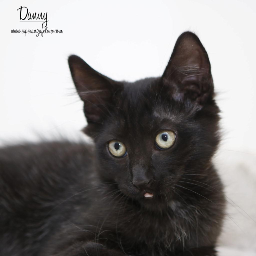 Danny, precioso negrutxi en adopcción, Álava (F.N: 14/05/2018) _mg_2819