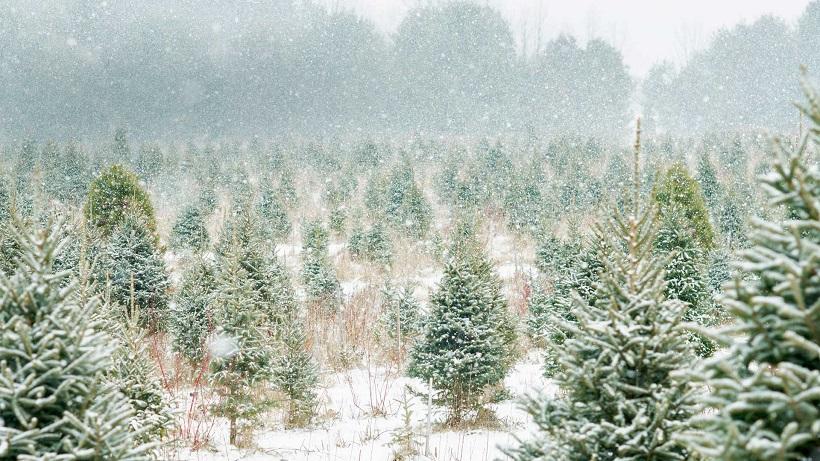 Зима, холод в картинках  Th1210