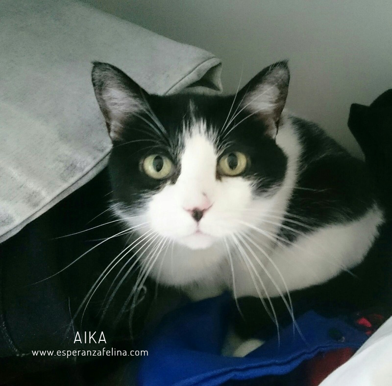 Aika, preciosa vaquita en adopción. (F.N: 01/01/12) Álava. 15524910
