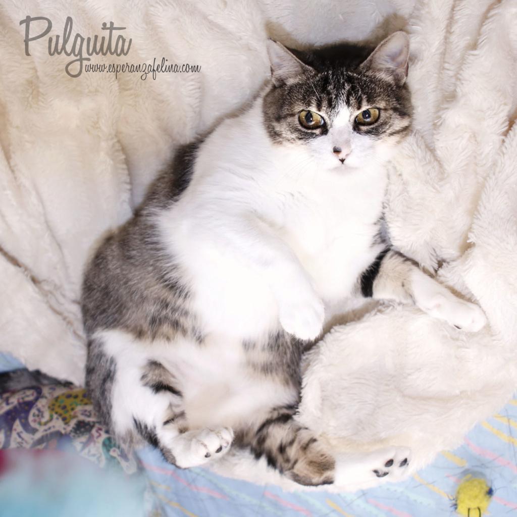 Pulguita, preciosa y mimosa gatita busca hogar. (F.N: 15/05/2012) (Positiva a inmuno + Leucemia) Álava. _mg_3010