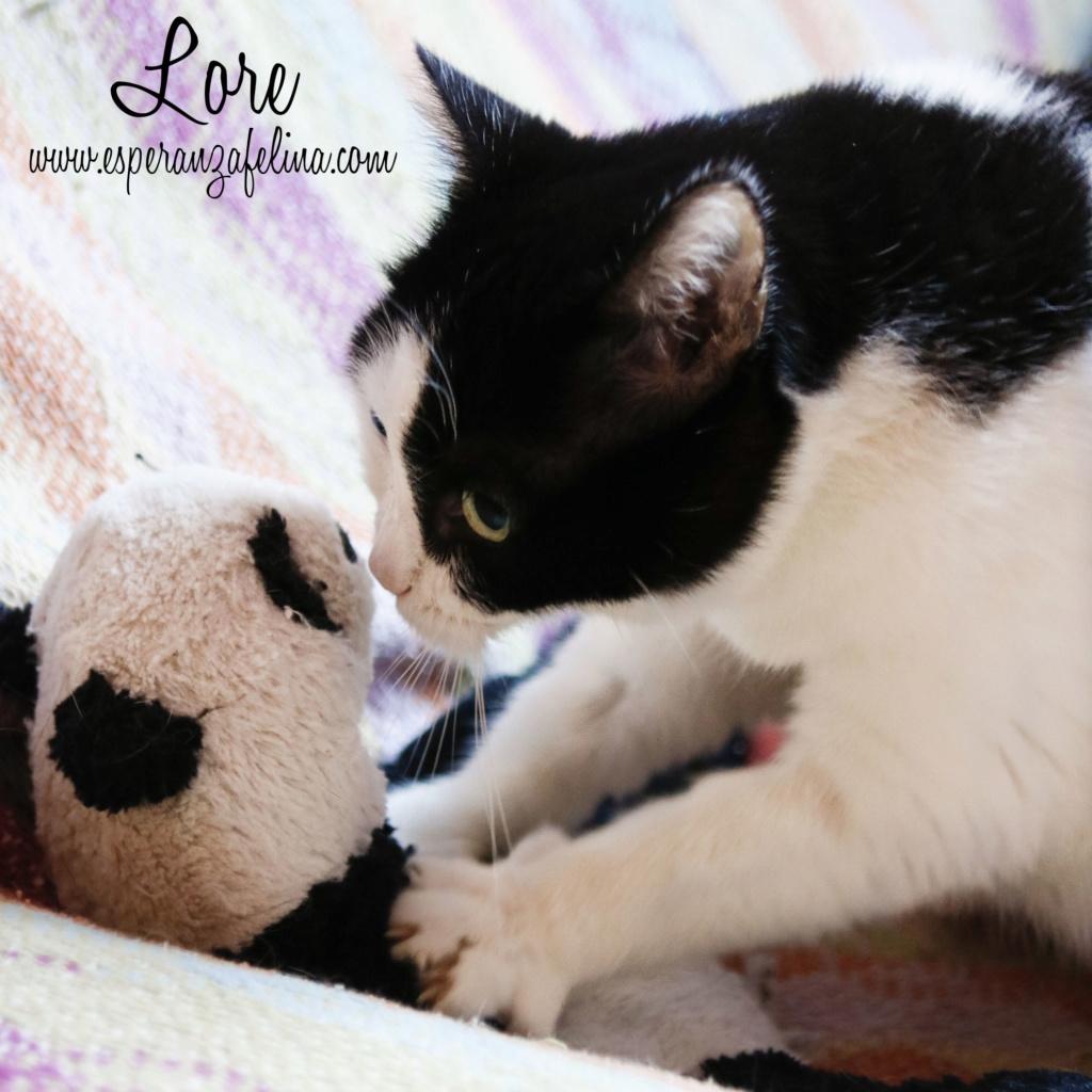 Lore, preciosa vaquita luchadora en adopción (Álava, F.N aprox. 2/04/12) _mg_3410