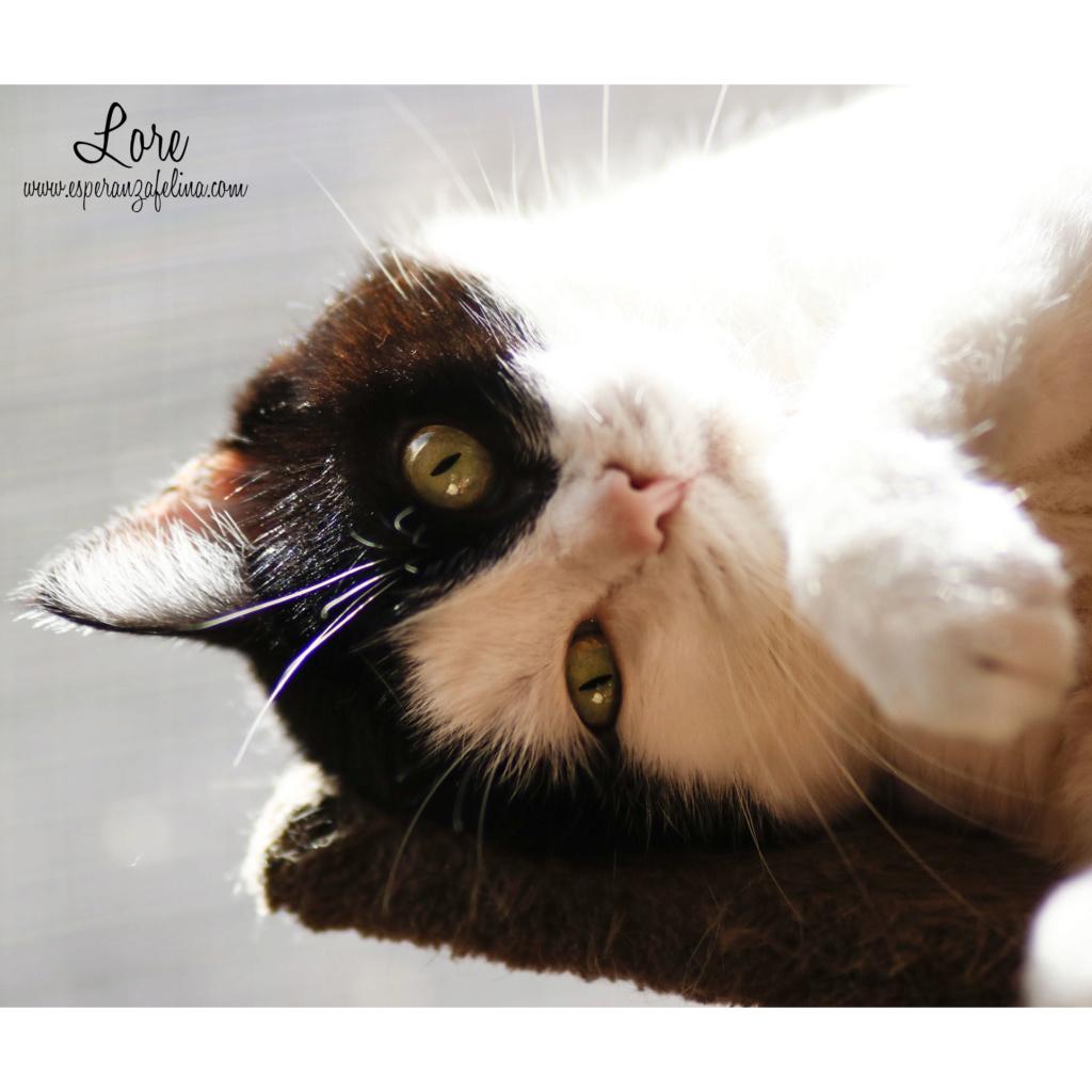 Lore, preciosa vaquita luchadora en adopción (Álava, F.N aprox. 2/04/12) _mg_3510