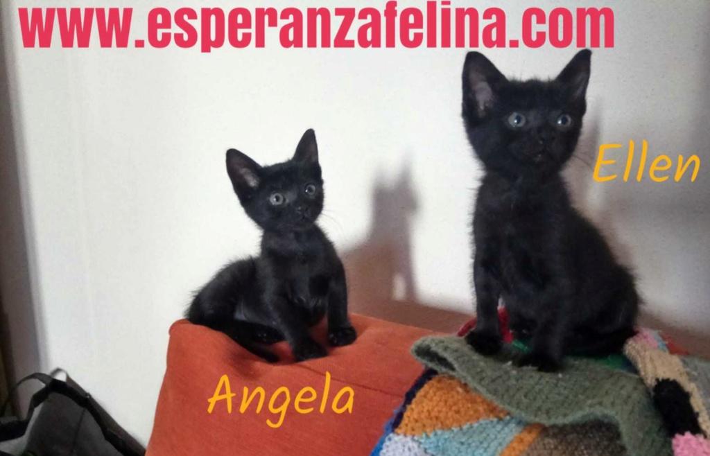 Angela y Ellen. Cachorritas en adopción (Alava, F.N 17/06/2018) Img-2021