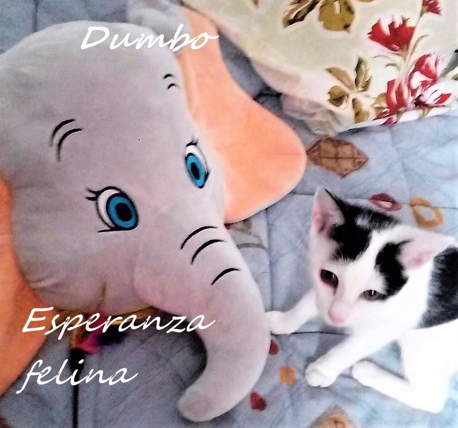 Dumbo, gatete juguetón busca hogar. Alava (Fec. Nac. Aprox. 07/05/2018) Img-2031