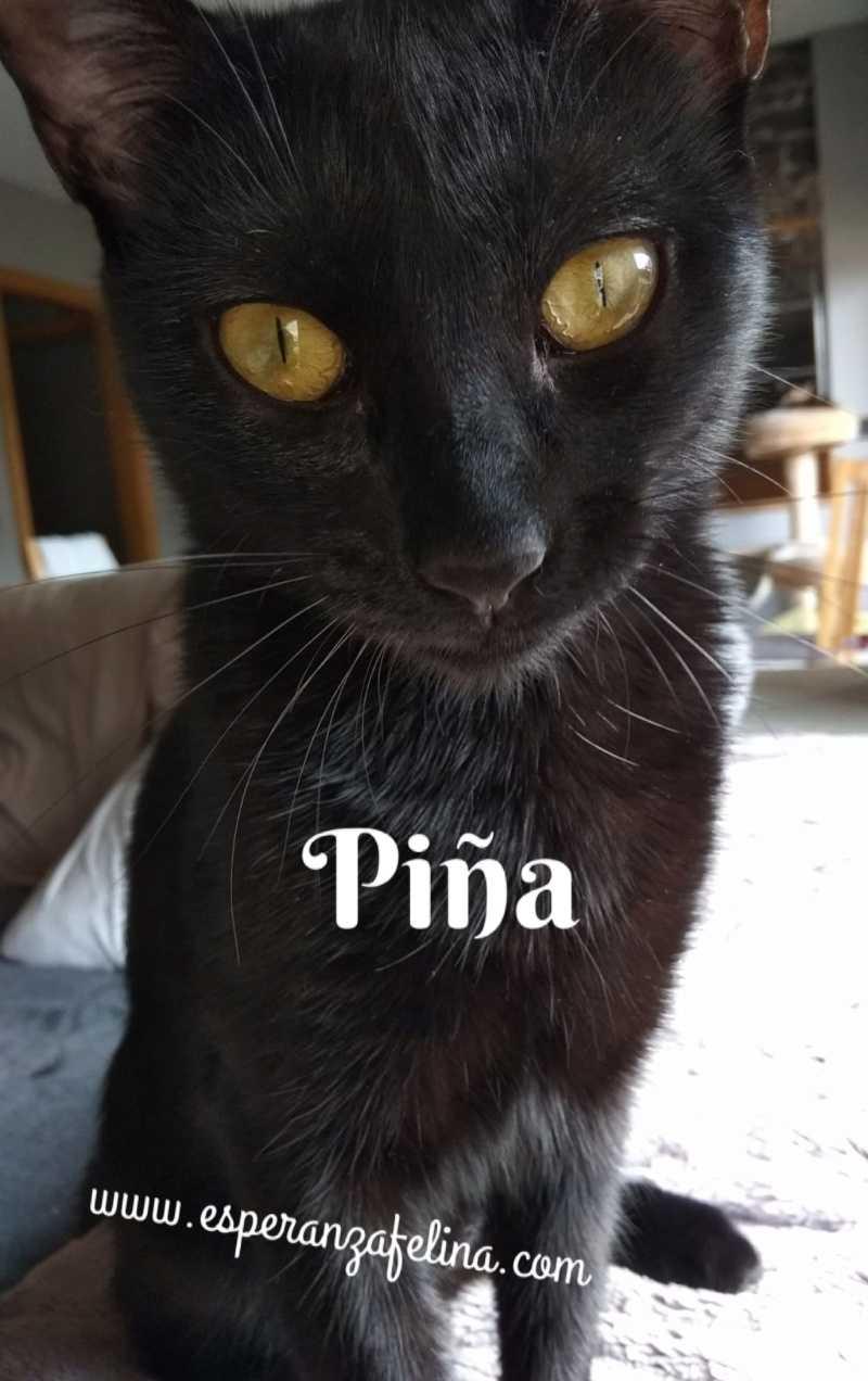 Piña y Piñón, parejita de negruchis en adopción (Alava, Fecha de nacimiento aprox.: 06/09/2017) Img-2032