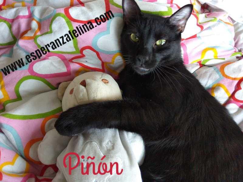 Piña y Piñón, parejita de negruchis en adopción (Alava, Fecha de nacimiento aprox.: 06/09/2017) Img-2033