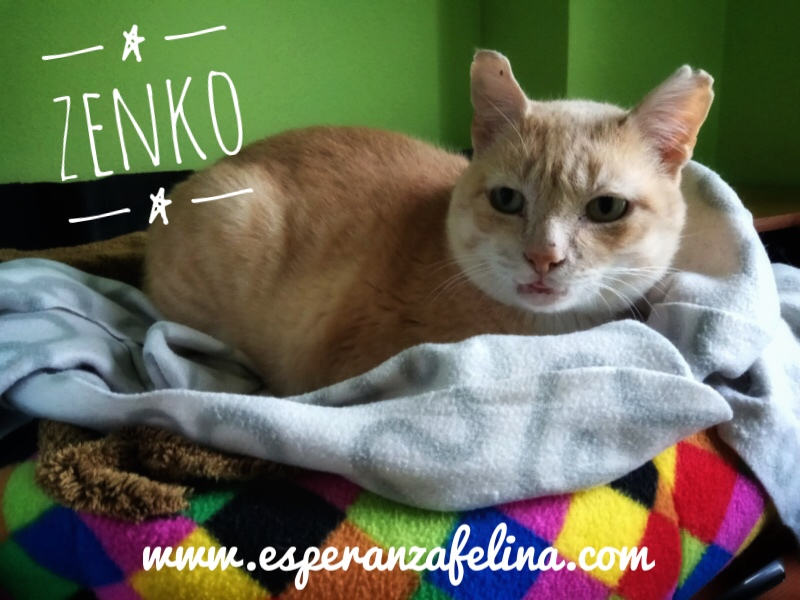 Zenko, precioso rubio en adopción. (F.N aprox: 15/01/2013) (Positivo a inmuno) Álava. Img-2035