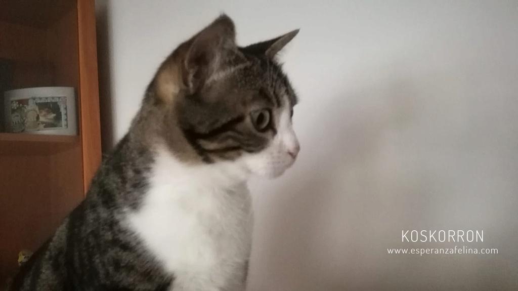 Koskorron, peluche en adopción +INMUNO ( Alava) ( F.N.aprox. 01/15) Koskor10