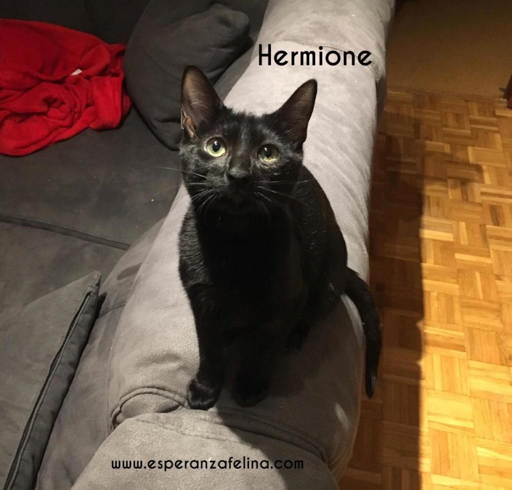 Hermione. Cachorrita con magia en adopción . Álava (F.N 15/10/18) Pl58f710