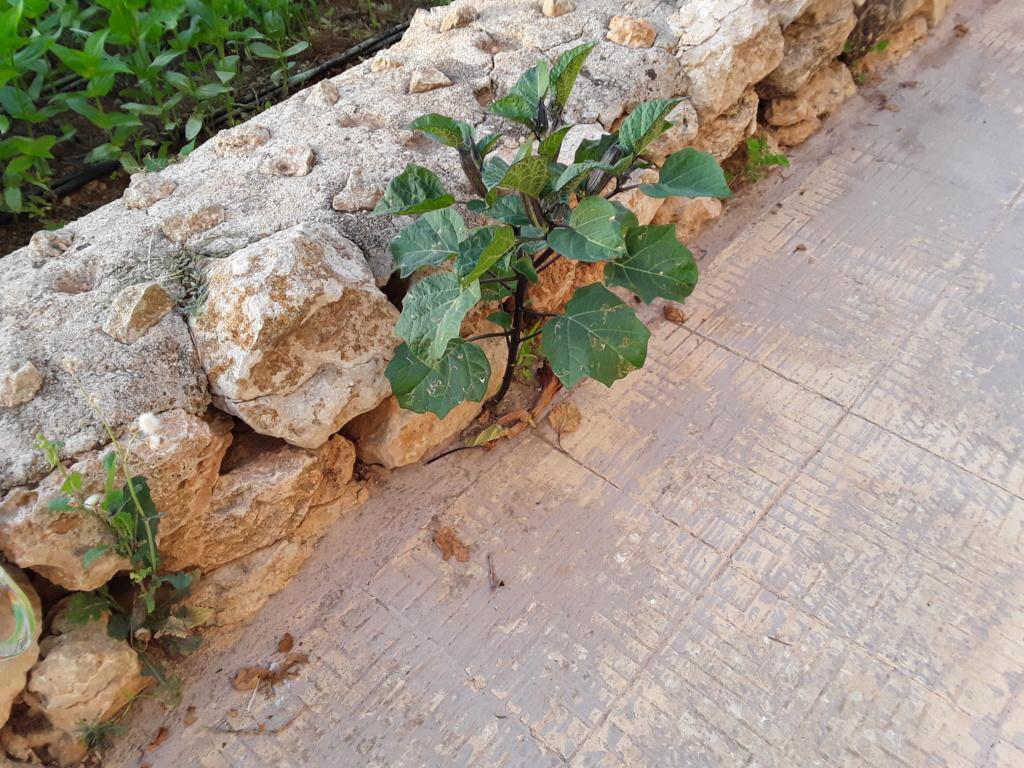 Прекрасная Мальта 20180955