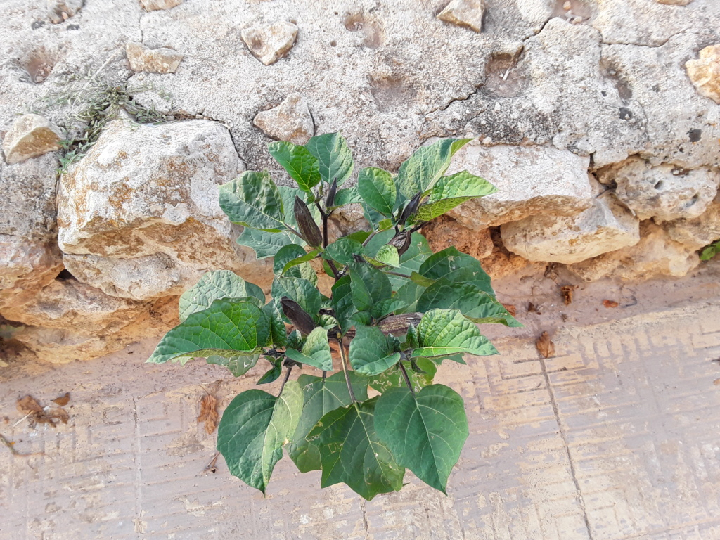 Прекрасная Мальта 20180956