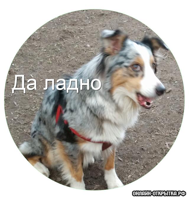 Нормари Парма Лейс - Страница 11 S_10