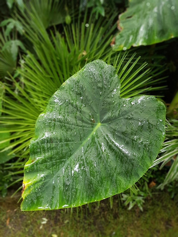 Rémi - Mon (tout) petit jardin en mode tropical - Page 9 20180228
