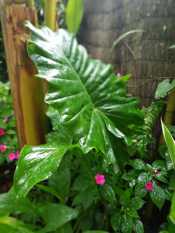 Rémi - Mon (tout) petit jardin en mode tropical - Page 9 20180229
