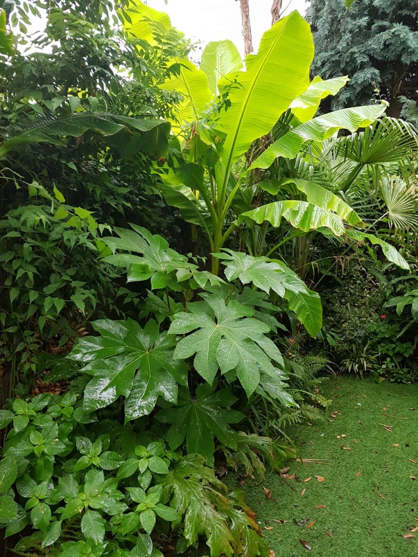 Rémi - Mon (tout) petit jardin en mode tropical - Page 9 20180234