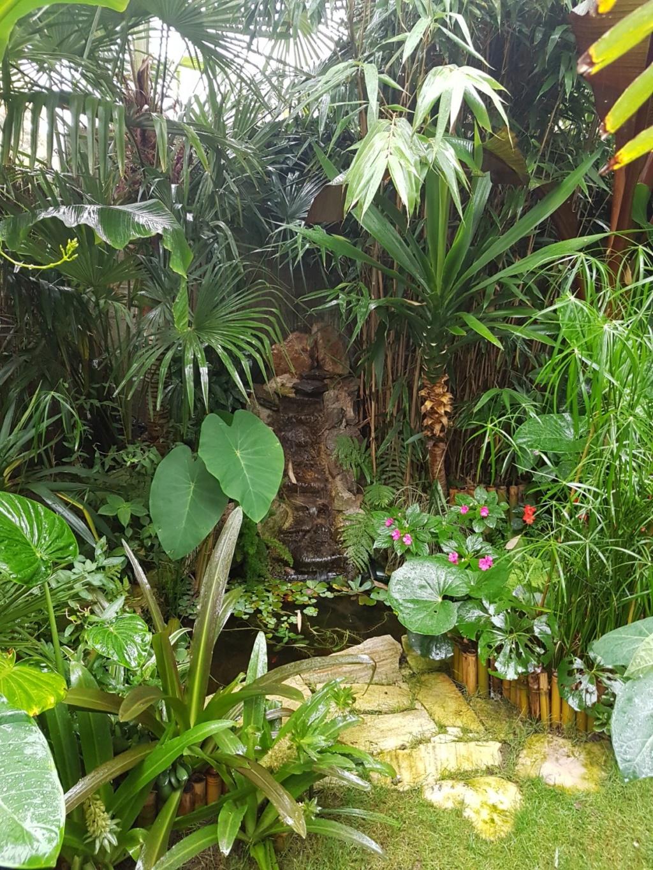 Rémi - Mon (tout) petit jardin en mode tropical - Page 9 20180238