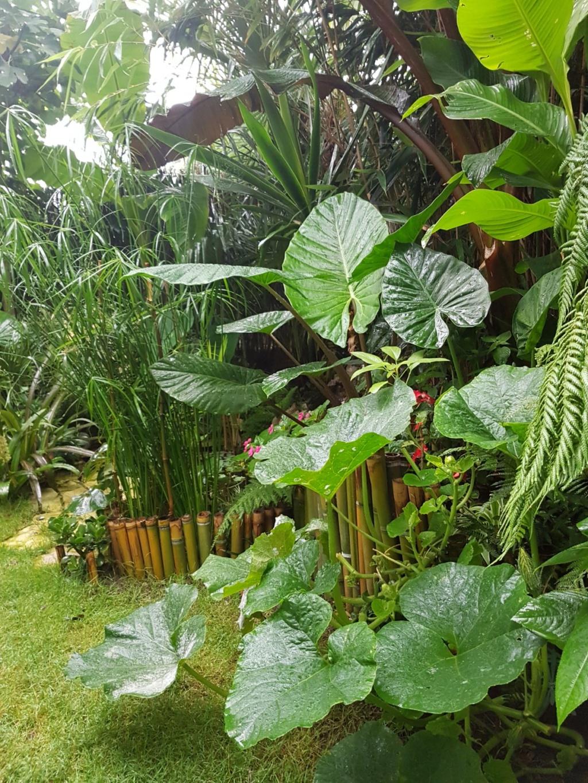 Rémi - Mon (tout) petit jardin en mode tropical - Page 9 20180240