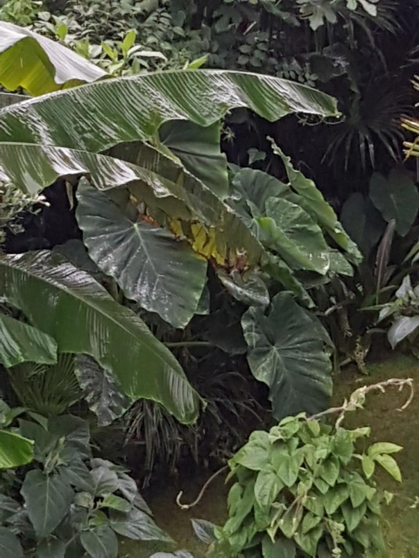 Rémi - Mon (tout) petit jardin en mode tropical - Page 9 20180242