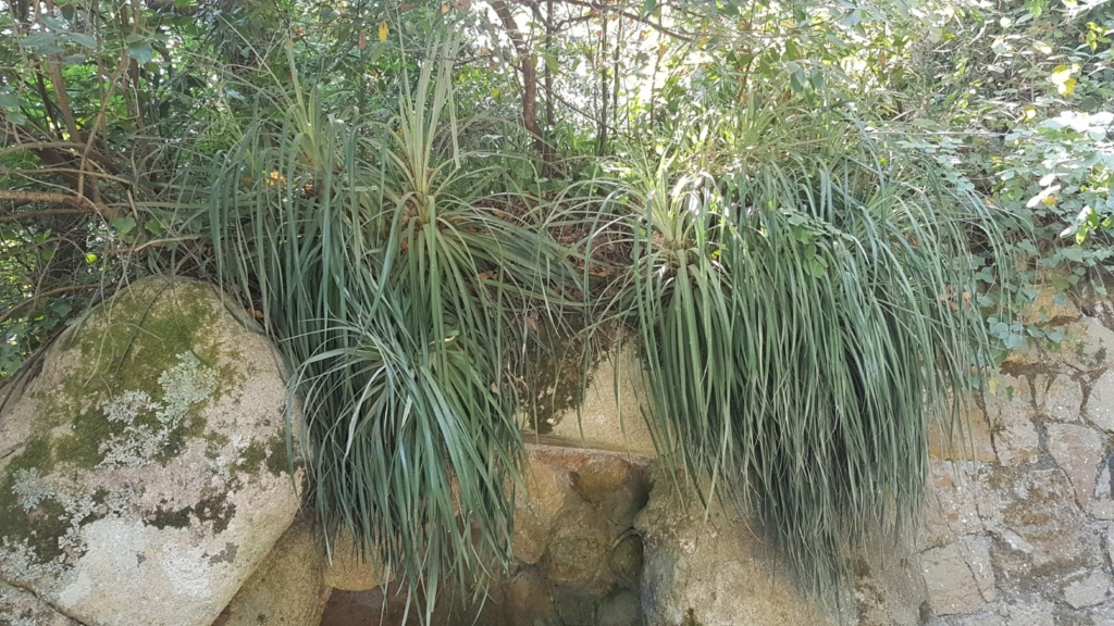 (Portugal) Jardins et palais da Regaleira - Sintra 20180273