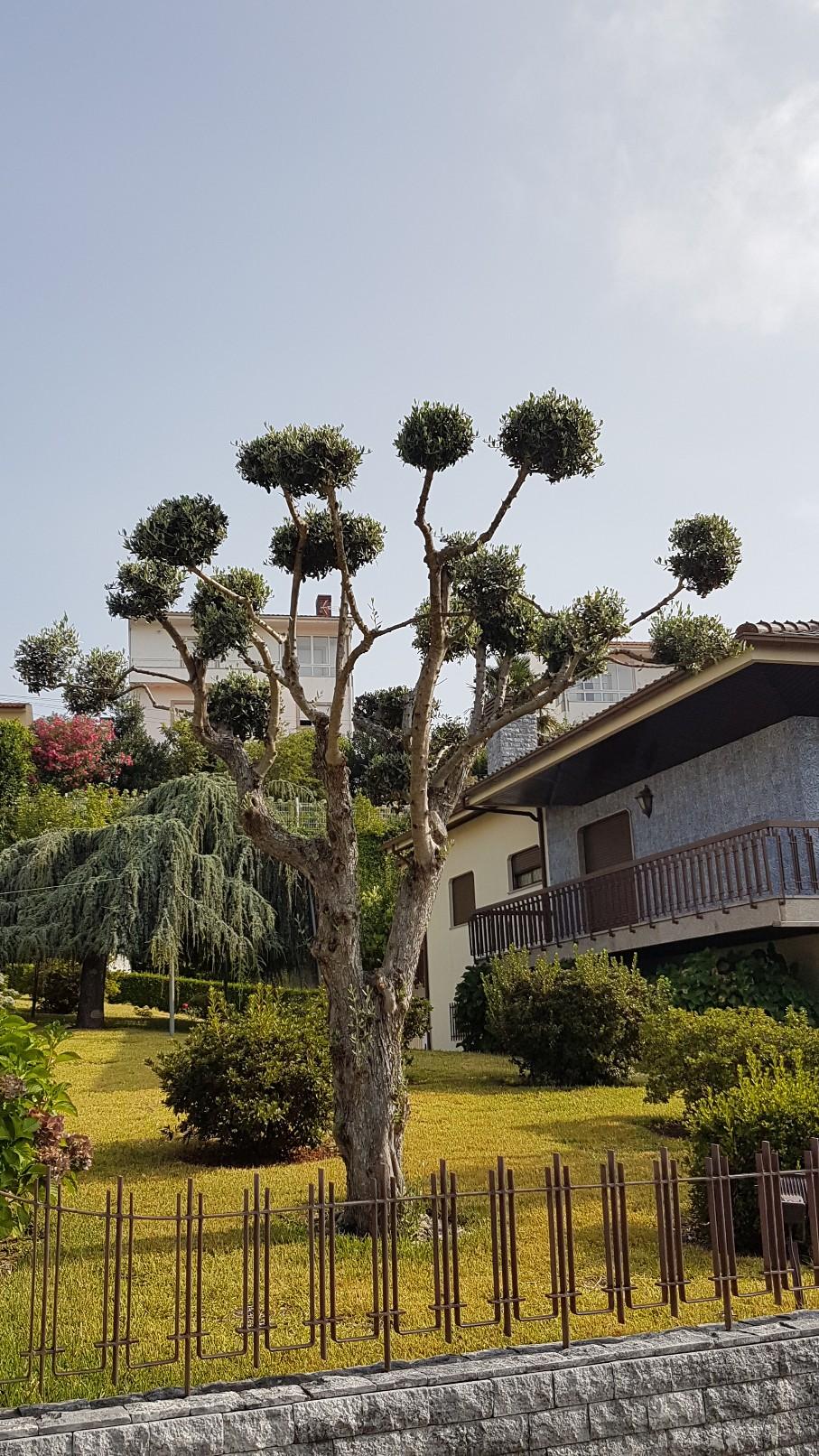 Portugal - Jardins région de Guimaraes  20180300