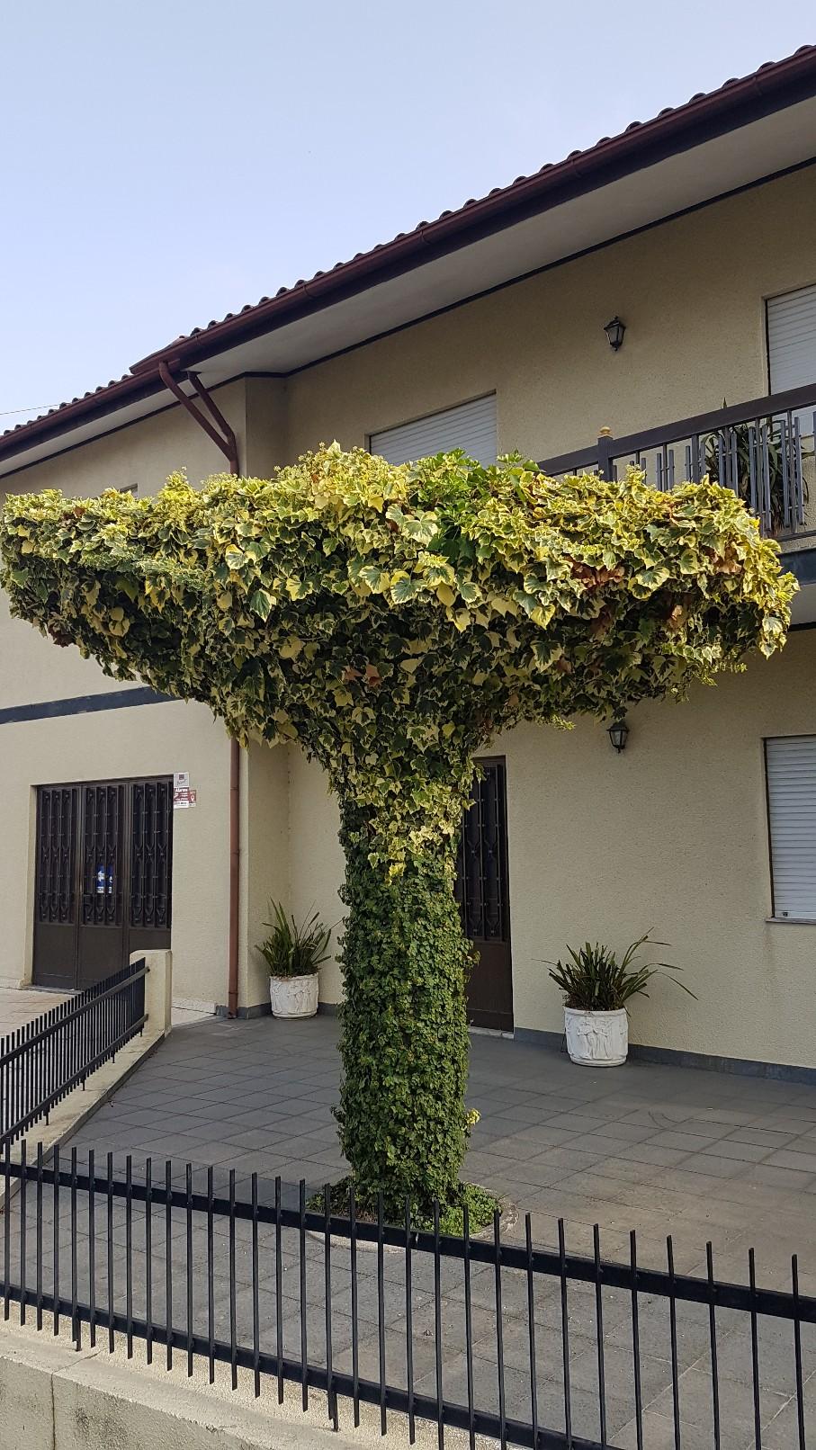 Portugal - Jardins région de Guimaraes  20180301