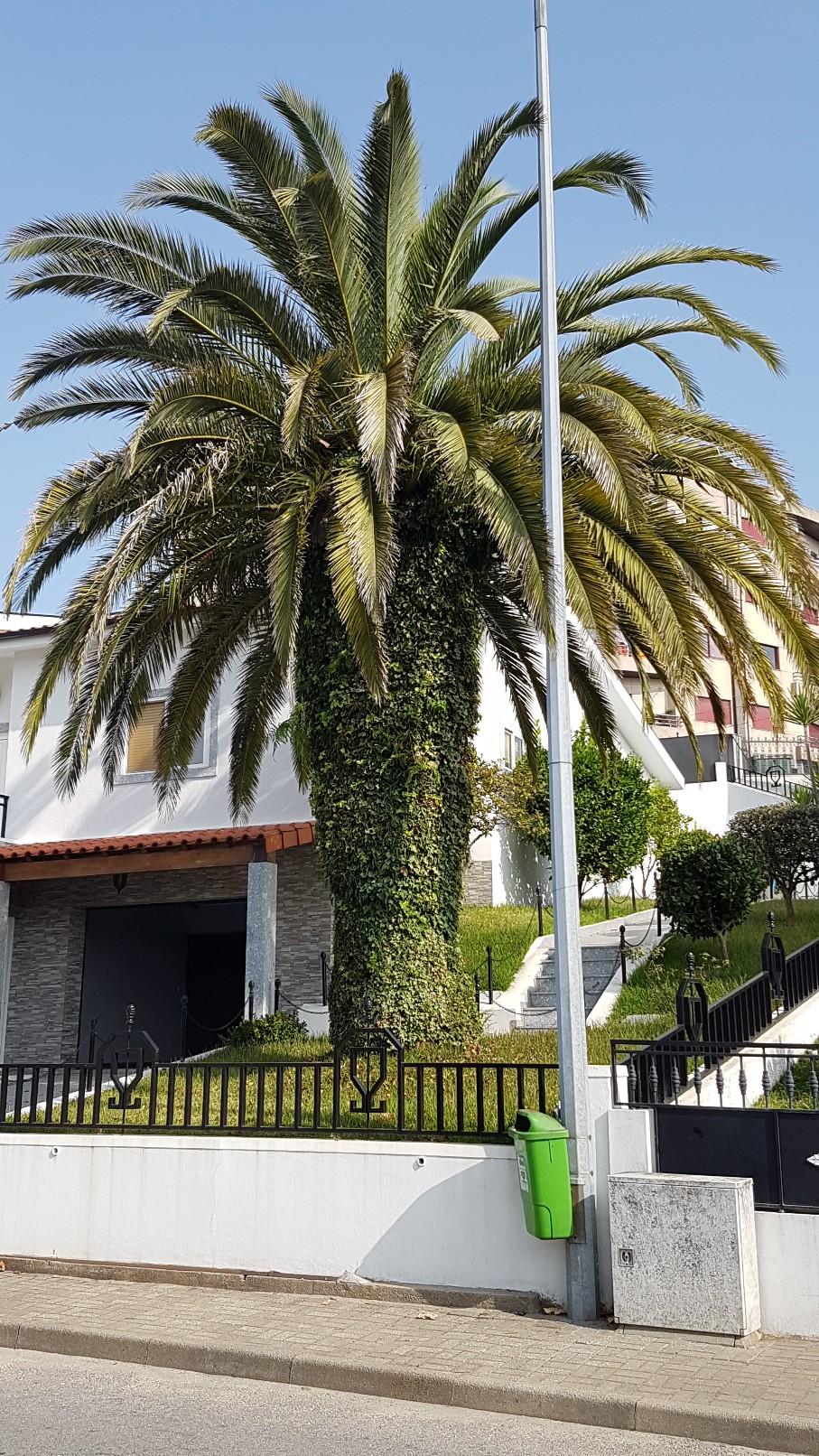 Portugal - Jardins région de Guimaraes  20180303