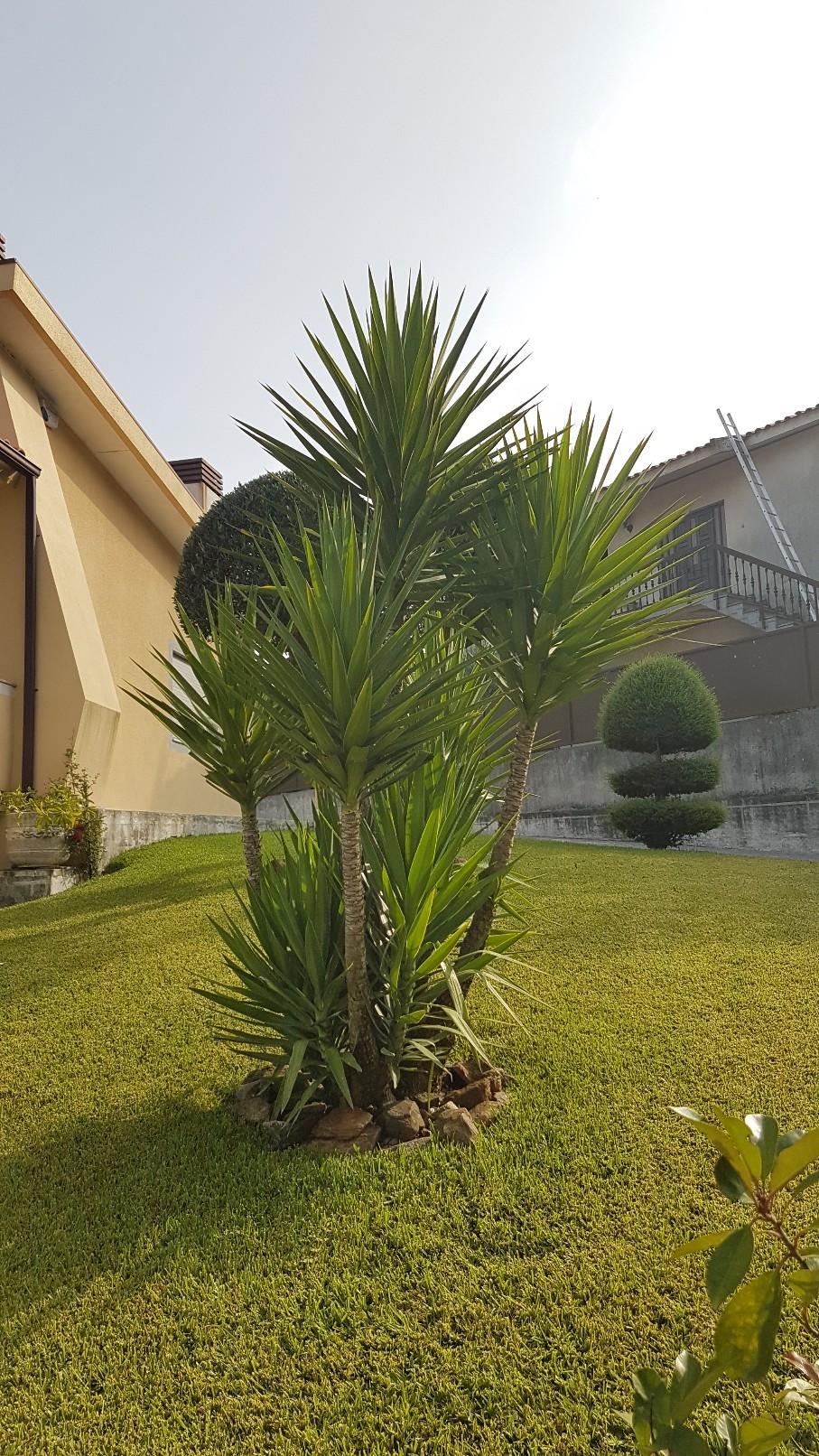 Portugal - Jardins région de Guimaraes  20180305