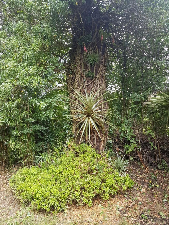 Puya chilensis 20180400